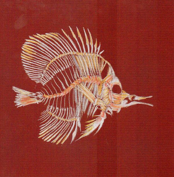 esqueleto pez: