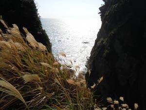 Wheatpatch Enoshima