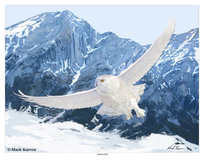 Snowy Owl by markkarvon