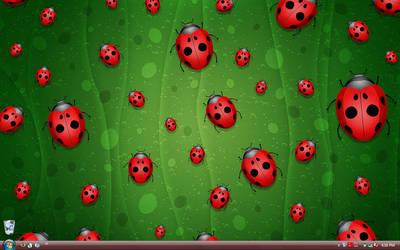 Desky Ladybugs