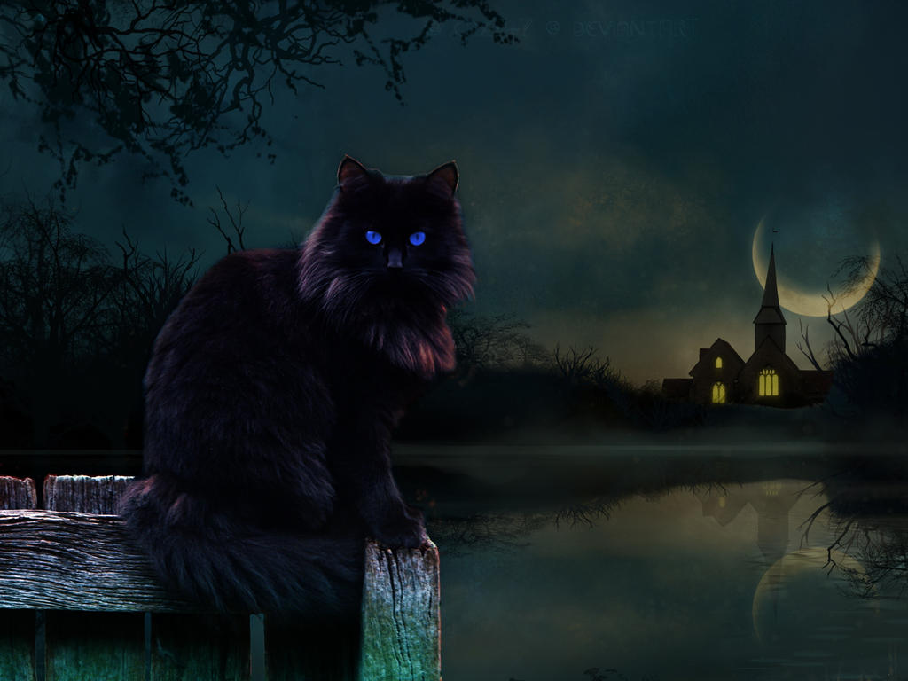 Best Wallpaper Night Cat - the_moon__the_night_and_the_cat__by_caz747-d6w7x56  Picture.jpg