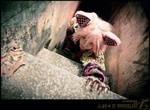 AiW: Gaga-ing Cat