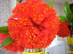 pretty flowers C: