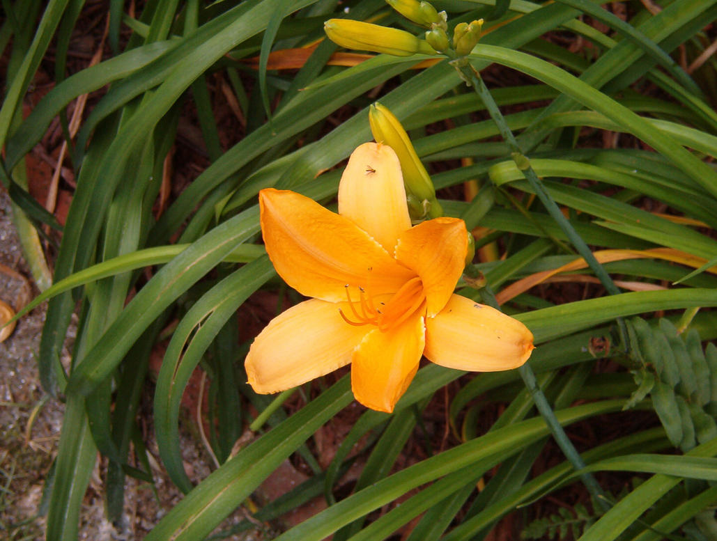 pdelgado flower by pdelgado