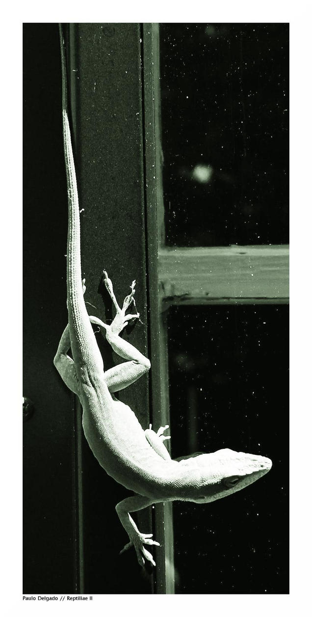 Reptiliae II by pdelgado