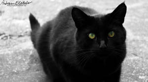 The Black Cat by AndrewFletcher