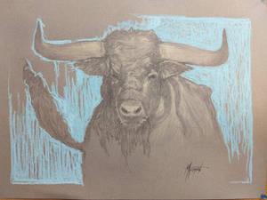 Galloway Bull
