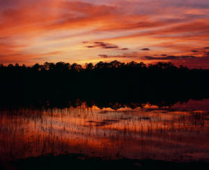 Clearwater Lake, Ocala National forest