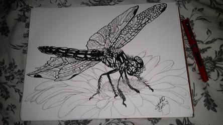 Inktober day 7 Dragonfly by KatTheGrrreat