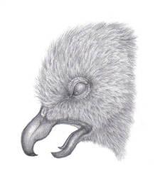 Realistic Bird Sketch: Raven by VampireSelene13