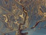 Dali's Tree by jrgee