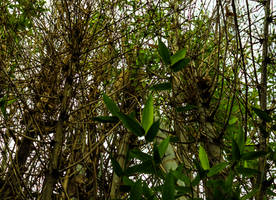 Bamboo by AaronMk