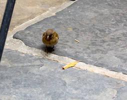 Finch Find by AaronMk