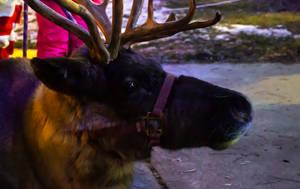 Caribou Deer by AaronMk