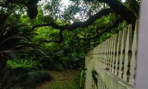 Garden Fence by AaronMk