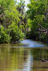 Bayou Adventures by AaronMk