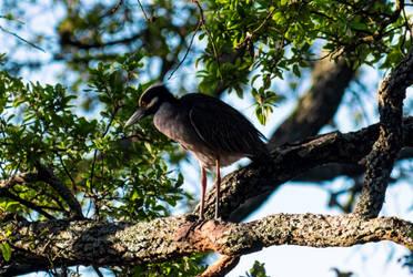 Mid-City Heron