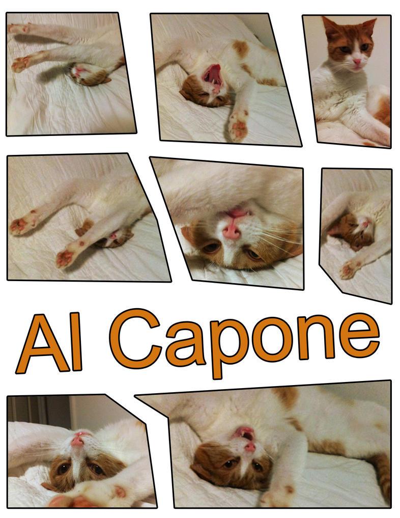 My Cat Al Capone by kasigawa
