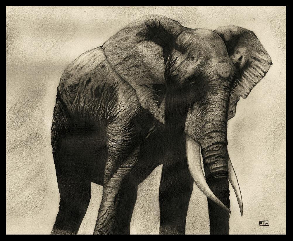 Elephant by JTIllustrations