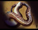 Hognose Snake - Tiny little danger noodle by Eden-West
