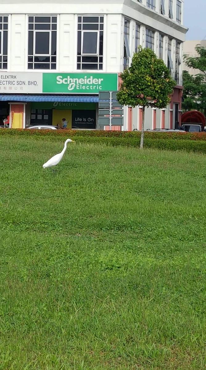 the white crane~ by Deviljackies
