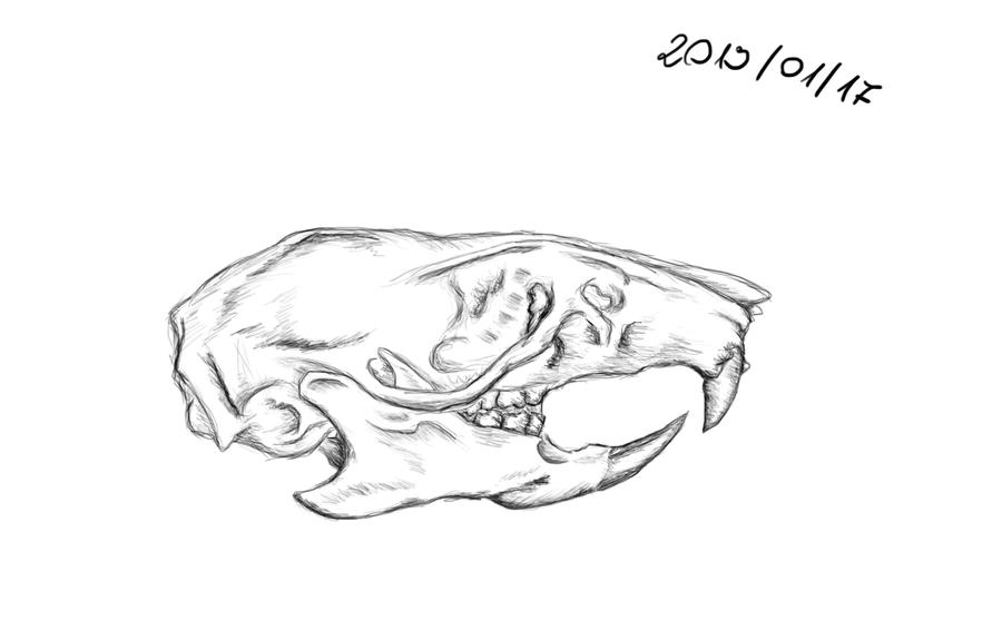Rat skull by Mocarro on DeviantArt