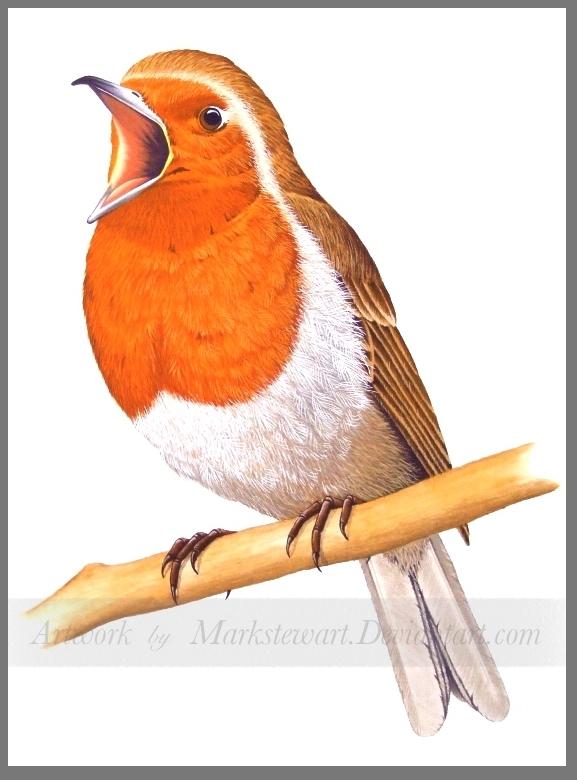 Robin by markstewart