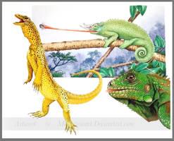 Lizards by markstewart