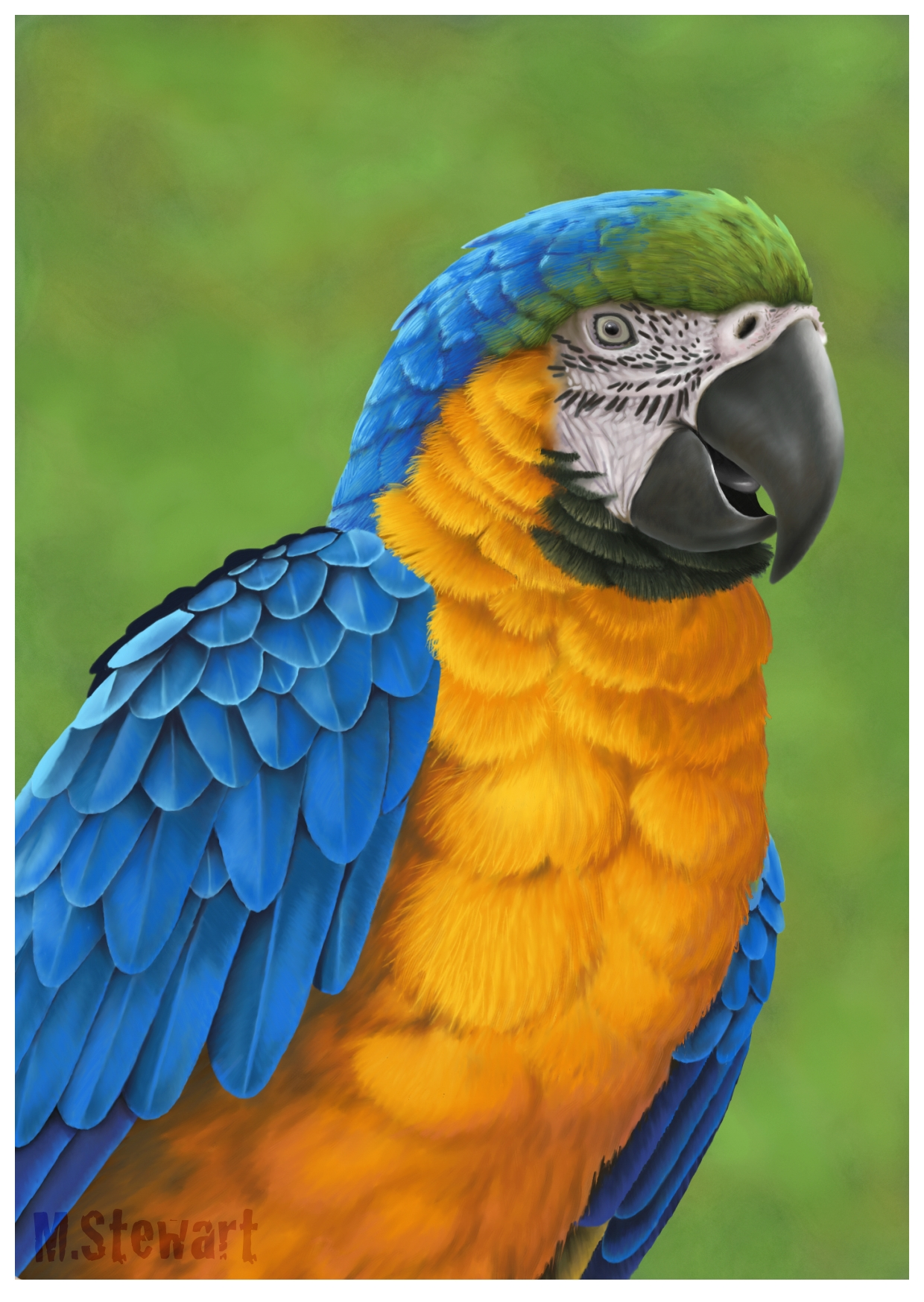 Blue and yellow macaw by markstewart