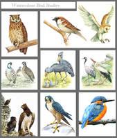 Bird studies by markstewart