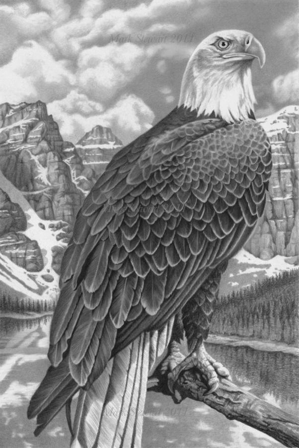 Bald Eagle by markstewart
