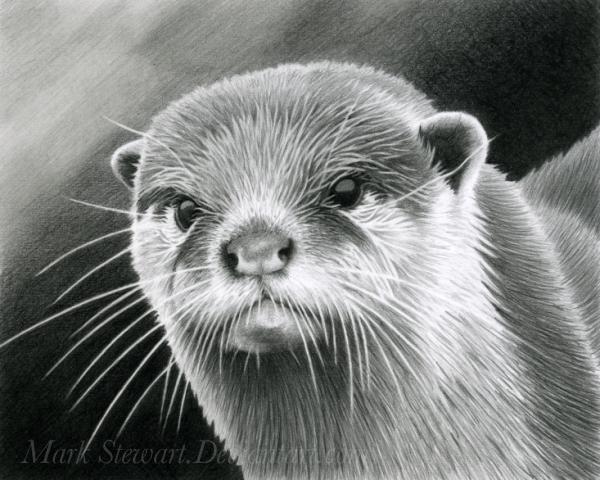 Otter study by markstewart