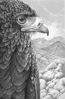 Raptor by markstewart