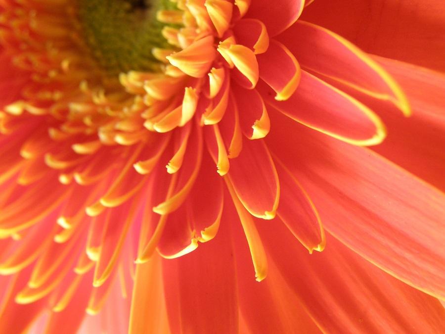 FLOWER by Dominikanin