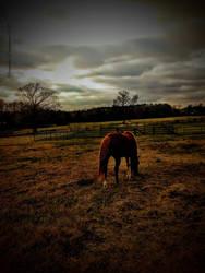 Solitude by Gardynn7