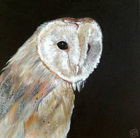 Night Owl by ckrickett