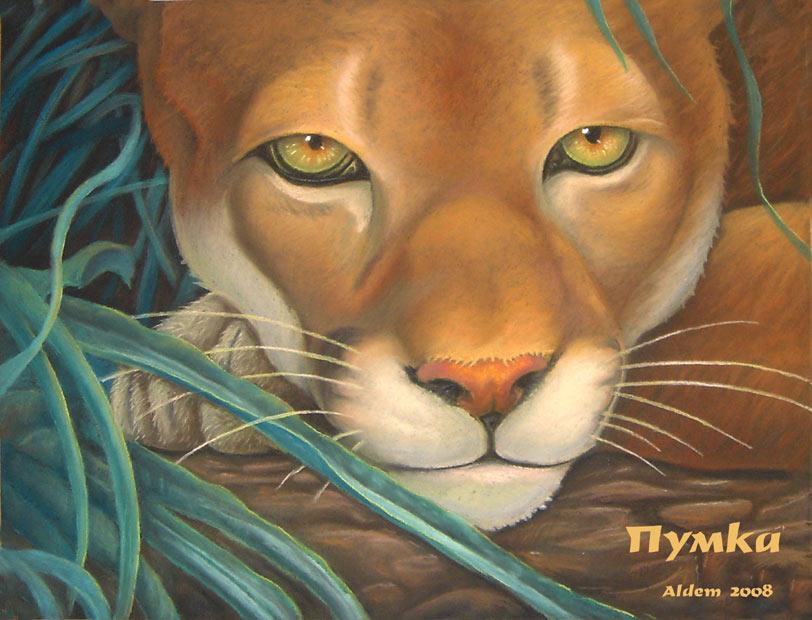 Puma portrait by AldemButcher