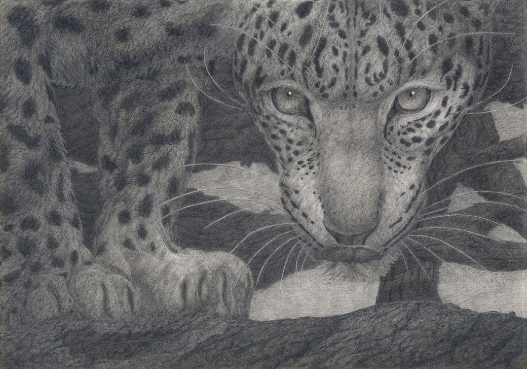 Far-Eastern Leopard's  glance by CalciteMink1610