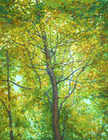 Autumnal radiant tree by CalciteMink1610