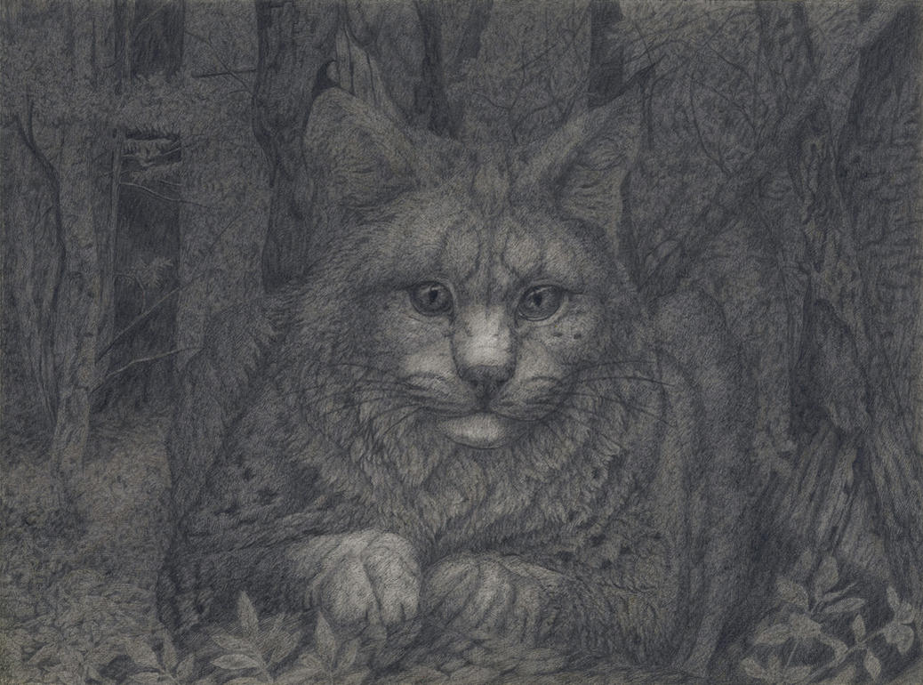 Sitting lynx's portrait by CalciteMink1610