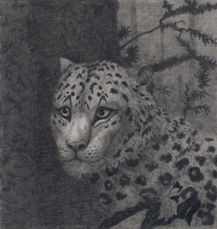 Snow leopard at the pinetree by CalciteMink1610