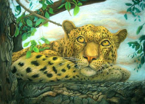 Pensive leopard