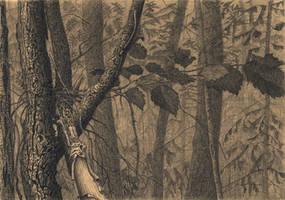 Infinite calm woods by CalciteMink1610