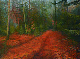 Red Carpet Of The  Forest At Evening by CalciteMink1610