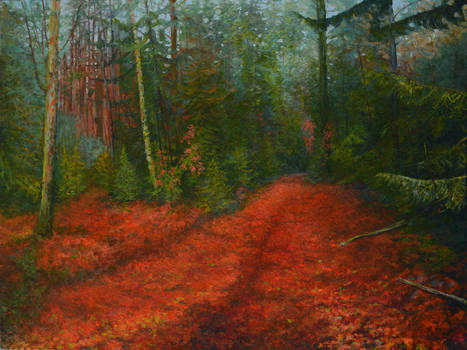 Red Carpet Of The  Forest At Evening
