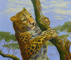 Young Leopard On Tree