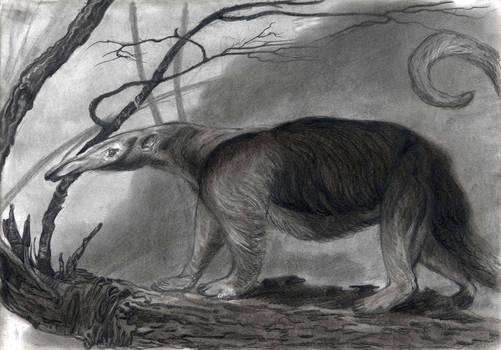 Four-fingered Anteater