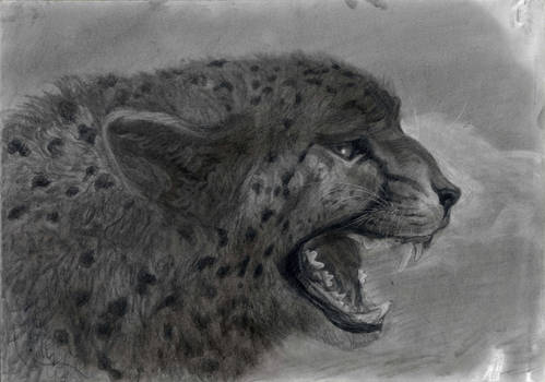 Cheetah With Open Mouth