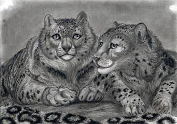 Snow Leopards Pair