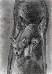 Wolf With Cub